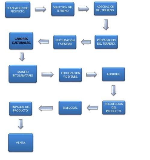 proceso productivo primaria