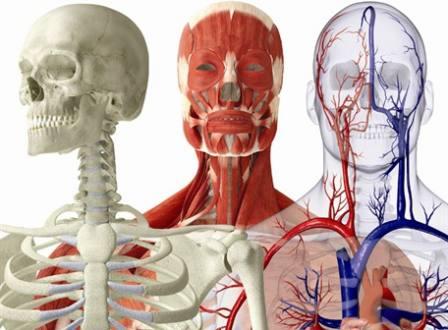 Sistemas del cuerpo humano | Mi clase de TIC