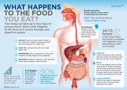 Infohub-infographic_Digestion